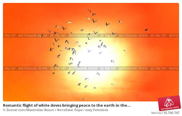 Romantic flight of white doves bringing peace to the earth in the... Стоковое фото, фотограф Zoonar.com/Maximilian Buzun / easy Fotostock / Фотобанк Лори