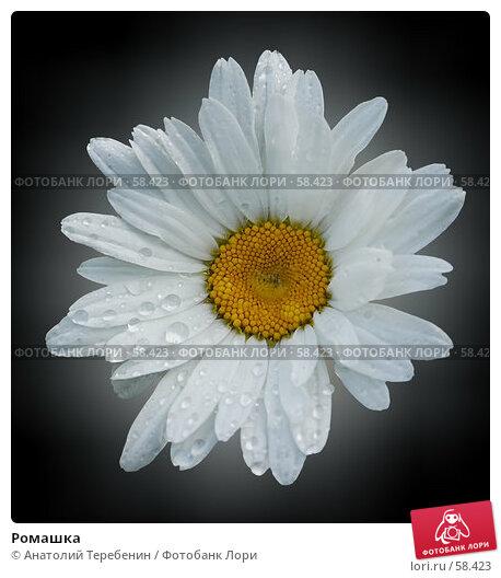 Купить «Ромашка», иллюстрация № 58423 (c) Анатолий Теребенин / Фотобанк Лори