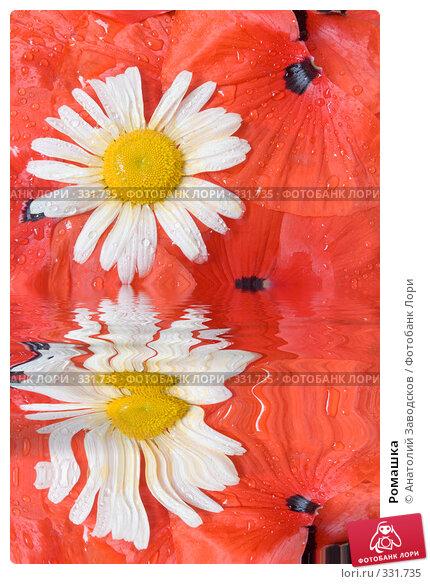 Ромашка, фото № 331735, снято 27 мая 2007 г. (c) Анатолий Заводсков / Фотобанк Лори