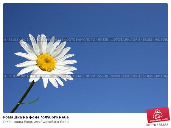 Ромашка на фоне голубого неба, фото № 56835, снято 1 июля 2007 г. (c) Ханыкова Людмила / Фотобанк Лори