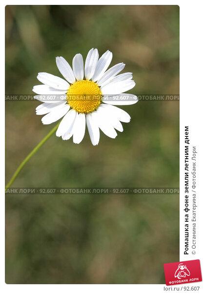 Ромашка на фоне земли летним днем, фото № 92607, снято 23 сентября 2007 г. (c) Останина Екатерина / Фотобанк Лори