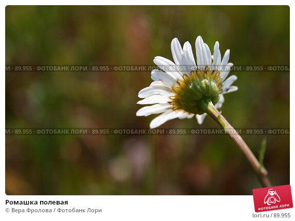 Ромашка полевая, фото № 89955, снято 17 июня 2007 г. (c) Вера Фролова / Фотобанк Лори
