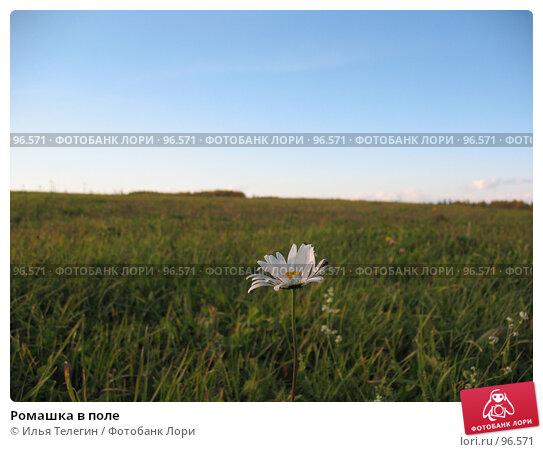 Ромашка в поле, фото № 96571, снято 24 сентября 2007 г. (c) Илья Телегин / Фотобанк Лори