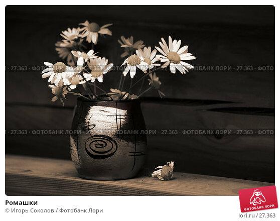 Купить «Ромашки», фото № 27363, снято 13 августа 2006 г. (c) Игорь Соколов / Фотобанк Лори