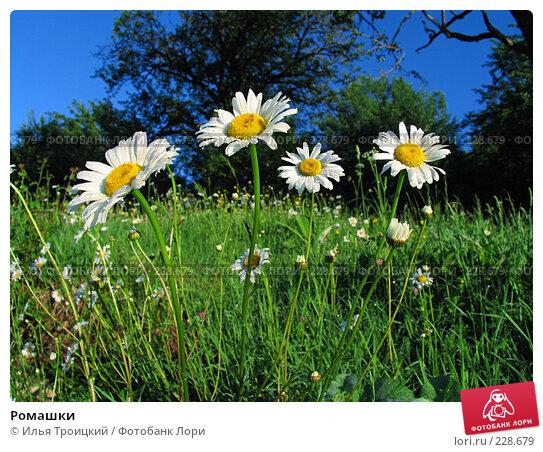 Ромашки, фото № 228679, снято 5 июня 2005 г. (c) Илья Троицкий / Фотобанк Лори