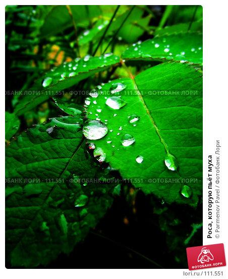 Роса, которую пьёт муха, фото № 111551, снято 16 июля 2006 г. (c) Parmenov Pavel / Фотобанк Лори