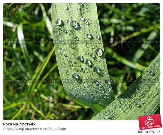 Роса на листьях, фото № 29115, снято 2 июля 2005 г. (c) Александр Авдеев / Фотобанк Лори