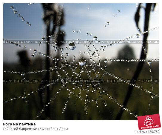 Роса на паутине, фото № 180739, снято 29 августа 2006 г. (c) Сергей Лаврентьев / Фотобанк Лори