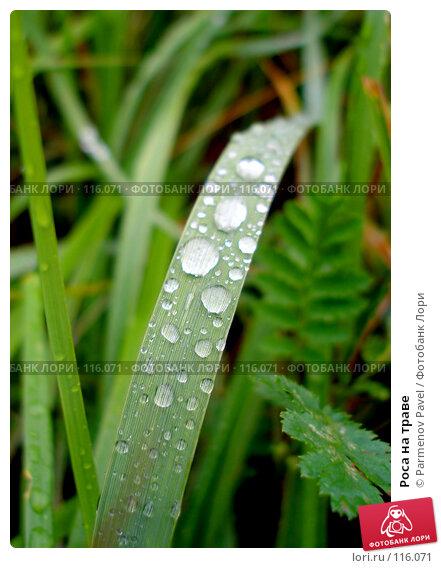 Роса на траве, фото № 116071, снято 2 августа 2007 г. (c) Parmenov Pavel / Фотобанк Лори