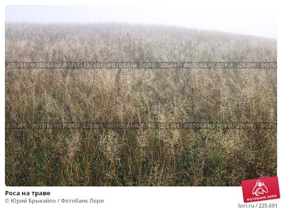 Купить «Роса на траве», фото № 225691, снято 29 сентября 2007 г. (c) Юрий Брыкайло / Фотобанк Лори