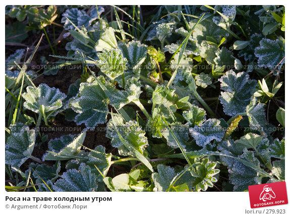 Роса на траве холодным утром, фото № 279923, снято 30 апреля 2008 г. (c) Argument / Фотобанк Лори