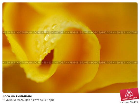 Роса на тюльпане, фото № 59463, снято 8 мая 2007 г. (c) Михаил Малышев / Фотобанк Лори