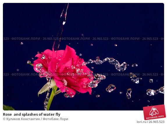 Купить «Rose  and splashes of water fly», фото № 26965523, снято 11 марта 2016 г. (c) Куликов Константин / Фотобанк Лори