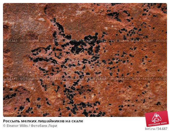 Купить «Россыпь мелких лишайников на скале», фото № 54687, снято 4 июля 2007 г. (c) Eleanor Wilks / Фотобанк Лори