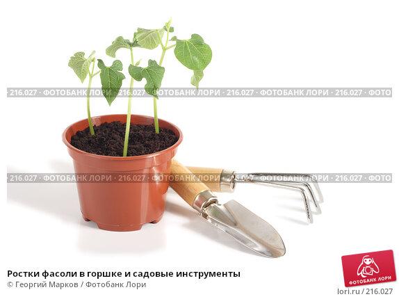 Ростки фасоли в горшке и садовые инструменты, фото № 216027, снято 29 февраля 2008 г. (c) Георгий Марков / Фотобанк Лори