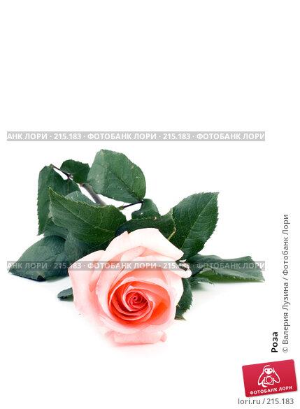 Роза, фото № 215183, снято 1 марта 2008 г. (c) Валерия Потапова / Фотобанк Лори