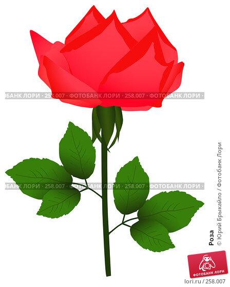 Роза, иллюстрация № 258007 (c) Юрий Брыкайло / Фотобанк Лори