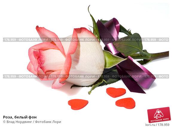 Роза, белый фон, фото № 178959, снято 23 декабря 2007 г. (c) Влад Нордвинг / Фотобанк Лори