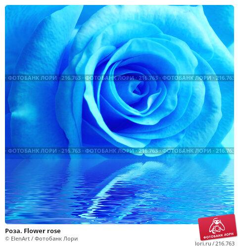 Роза. Flower rose, фото № 216763, снято 20 февраля 2017 г. (c) ElenArt / Фотобанк Лори