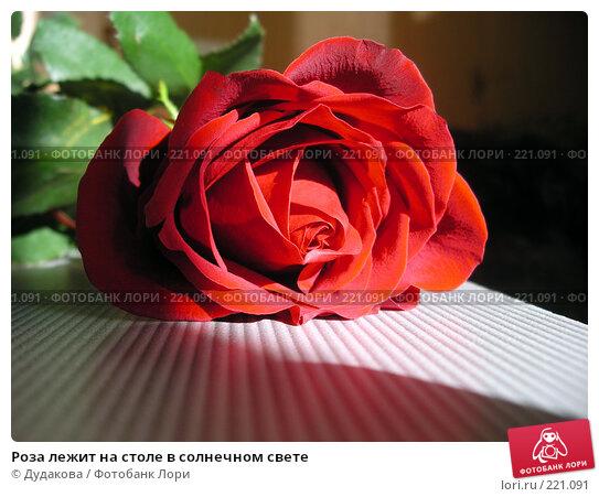Роза лежит на столе в солнечном свете, фото № 221091, снято 9 марта 2008 г. (c) Дудакова / Фотобанк Лори