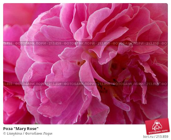 "Роза ""Mary Rose"", фото № 213859, снято 26 августа 2007 г. (c) Liseykina / Фотобанк Лори"