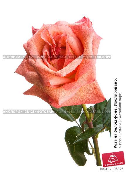 Роза на белом фоне. Изолировано., фото № 193123, снято 30 января 2008 г. (c) Иван Сазыкин / Фотобанк Лори