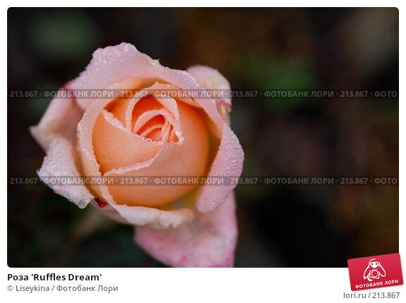 Роза 'Ruffles Dream', фото № 213867, снято 20 октября 2007 г. (c) Liseykina / Фотобанк Лори