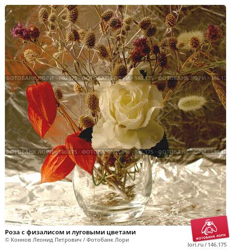 Роза с физалисом и луговыми цветами, фото № 146175, снято 13 декабря 2007 г. (c) Коннов Леонид Петрович / Фотобанк Лори
