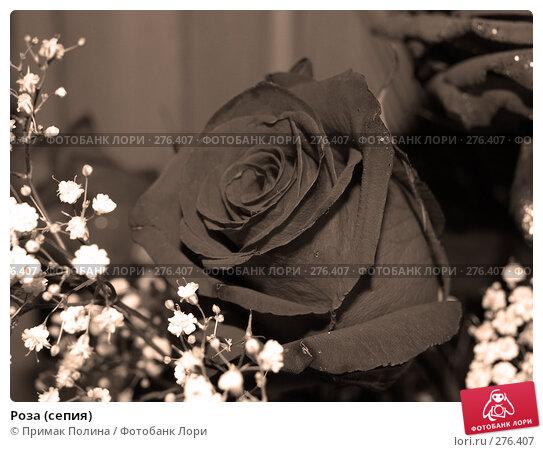 Роза (сепия), фото № 276407, снято 10 августа 2006 г. (c) Примак Полина / Фотобанк Лори