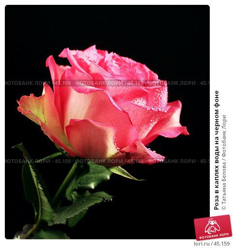 Роза в каплях воды на черном фоне, эксклюзивное фото № 45159, снято 15 февраля 2006 г. (c) Татьяна Белова / Фотобанк Лори