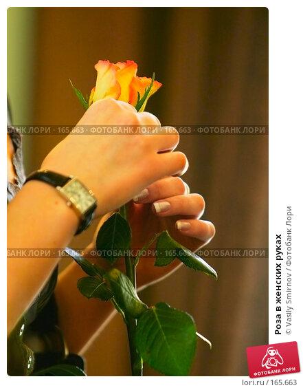 Роза в женских руках, фото № 165663, снято 24 марта 2007 г. (c) Vasily Smirnov / Фотобанк Лори