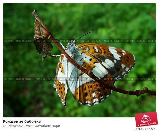 Рождение бабочки, фото № 66599, снято 25 июня 2005 г. (c) Parmenov Pavel / Фотобанк Лори