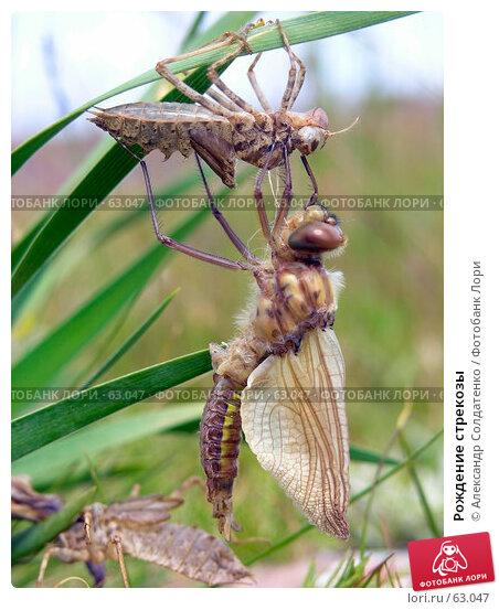 Рождение стрекозы, фото № 63047, снято 9 июня 2007 г. (c) Александр Солдатенко / Фотобанк Лори