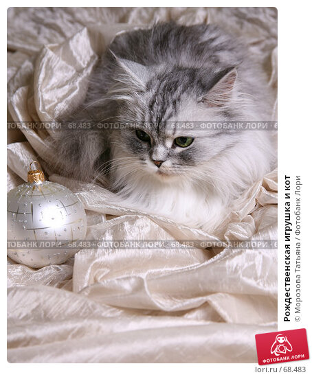 Рождественская игрушка и кот, фото № 68483, снято 25 ноября 2006 г. (c) Морозова Татьяна / Фотобанк Лори