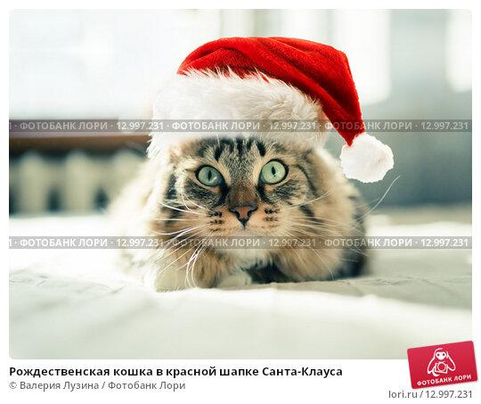Купить «Рождественская кошка в красной шапке Санта-Клауса», фото № 12997231, снято 20 июля 2019 г. (c) Валерия Потапова / Фотобанк Лори