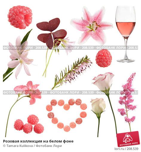Розовая коллекция на белом фоне, фото № 208539, снято 9 августа 2017 г. (c) Tamara Kulikova / Фотобанк Лори