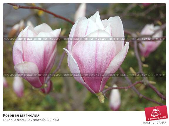 Розовая магнолия, фото № 172455, снято 19 апреля 2006 г. (c) Алёна Фомина / Фотобанк Лори