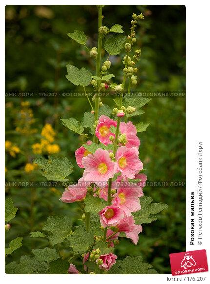 Розовая мальва, фото № 176207, снято 8 июля 2007 г. (c) Петухов Геннадий / Фотобанк Лори