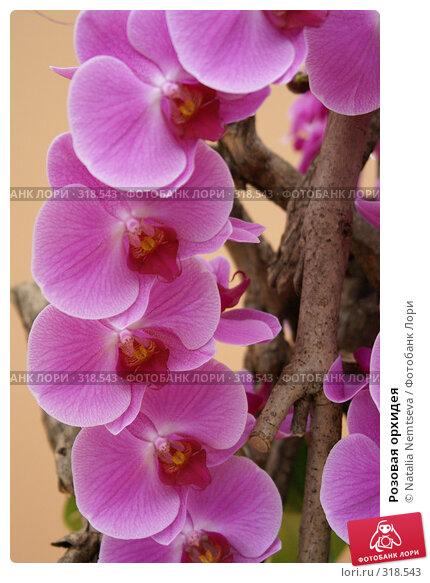 Розовая орхидея, эксклюзивное фото № 318543, снято 8 апреля 2008 г. (c) Natalia Nemtseva / Фотобанк Лори