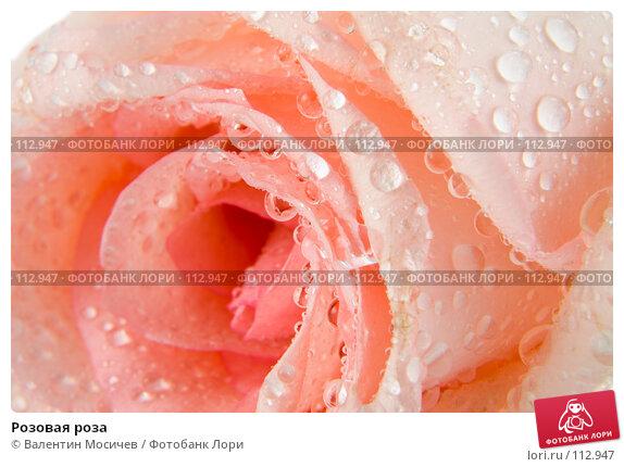 Розовая роза, фото № 112947, снято 16 февраля 2007 г. (c) Валентин Мосичев / Фотобанк Лори