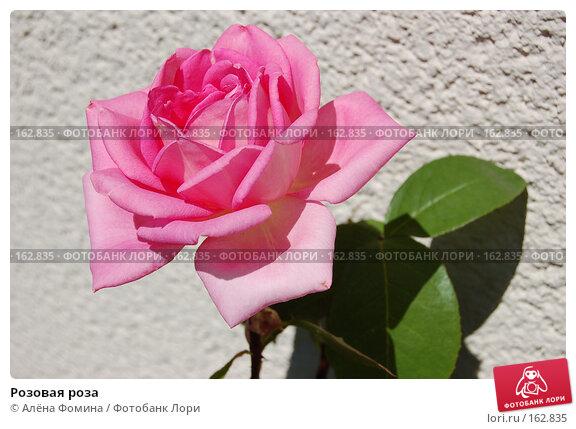 Купить «Розовая роза», фото № 162835, снято 13 июня 2006 г. (c) Алёна Фомина / Фотобанк Лори