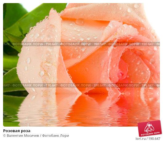 Розовая роза, фото № 190647, снято 16 февраля 2007 г. (c) Валентин Мосичев / Фотобанк Лори