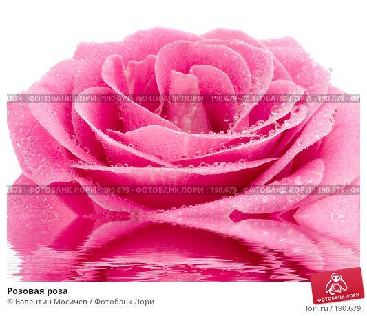 Розовая роза, фото № 190679, снято 3 марта 2007 г. (c) Валентин Мосичев / Фотобанк Лори