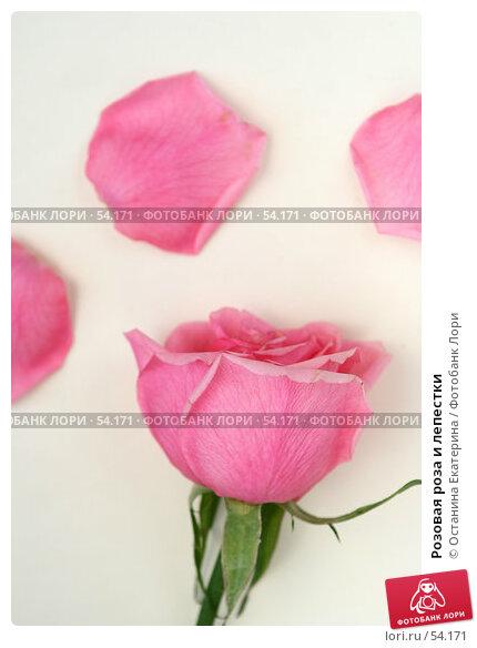 Розовая роза и лепестки, фото № 54171, снято 23 февраля 2007 г. (c) Останина Екатерина / Фотобанк Лори