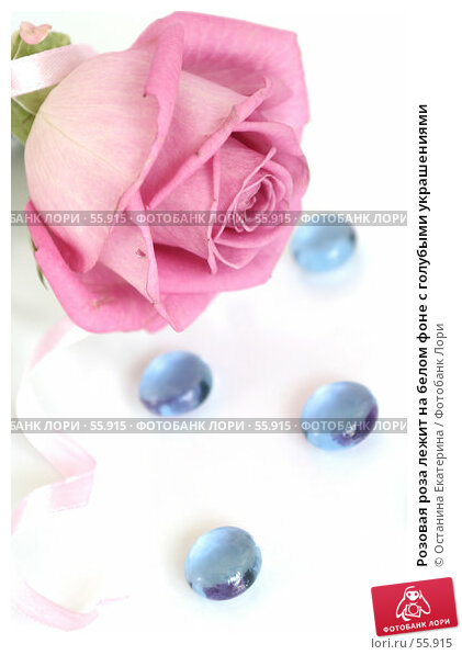 Розовая роза лежит на белом фоне с голубыми украшениями, фото № 55915, снято 29 марта 2007 г. (c) Останина Екатерина / Фотобанк Лори