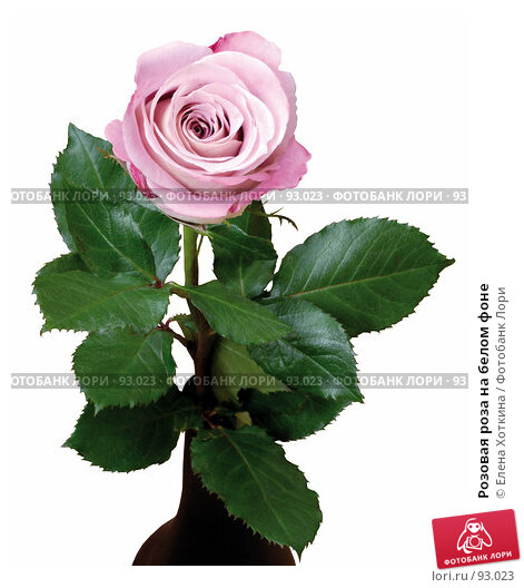 Купить «Розовая роза на белом фоне», фото № 93023, снято 23 марта 2018 г. (c) Елена Хоткина / Фотобанк Лори