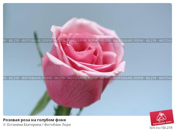 Купить «Розовая роза на голубом фоне», фото № 60219, снято 23 февраля 2007 г. (c) Останина Екатерина / Фотобанк Лори