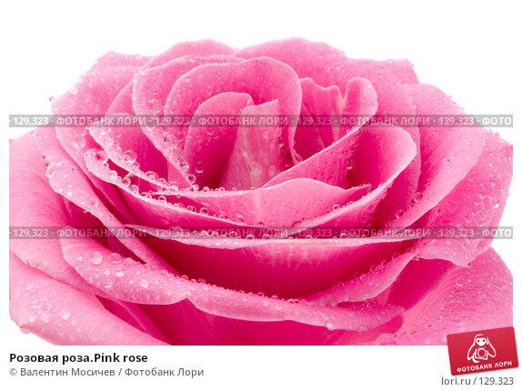Купить «Розовая роза.Pink rose», фото № 129323, снято 3 марта 2007 г. (c) Валентин Мосичев / Фотобанк Лори