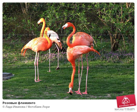 Розовые фламинго, фото № 119871, снято 5 апреля 2007 г. (c) Лада Иванова / Фотобанк Лори