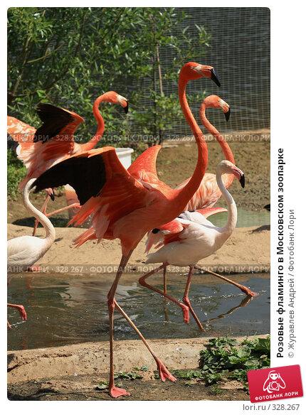 Розовые фламинго в Московском зоопарке, эксклюзивное фото № 328267, снято 18 июня 2008 г. (c) Журавлев Андрей / Фотобанк Лори